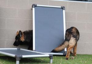 Dog Boarding Crownsville MD